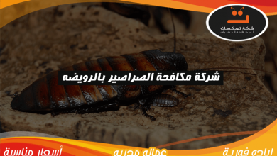 Photo of شركة مكافحة الصراصير بالرويضه