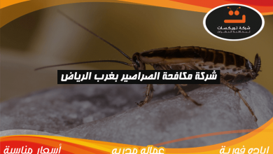 Photo of شركة مكافحة الصراصير بغرب الرياض