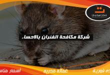 Photo of شركة مكافحة الفئران بالاحساء