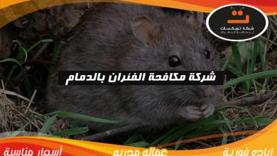 Photo of شركة مكافحة الفئران بالدمام
