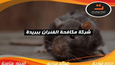 Photo of شركة مكافحة الفئران ببريدة
