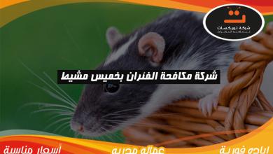 Photo of شركة مكافحة الفئران بخميس مشيط
