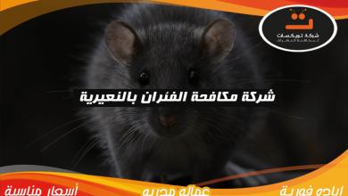 Photo of شركة مكافحة الفئران بالنعيرية