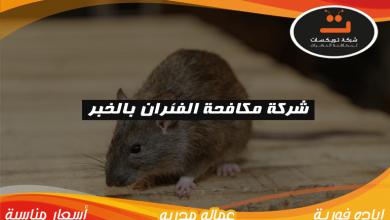 Photo of شركة مكافحة الفئران بالخبر