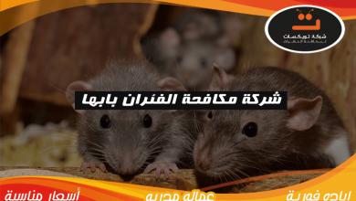 Photo of شركة مكافحة الفئران بابها