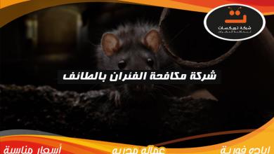 Photo of شركة مكافحة الفئران بالطائف