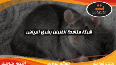Photo of شركة مكافحة الفئران بشرق الرياض