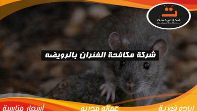 Photo of شركة مكافحة الفئران بالرويضه