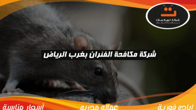 Photo of شركة مكافحة الفئران بغرب الرياض