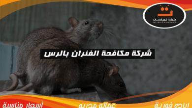 Photo of شركة مكافحة الفئران بالرس