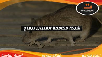 Photo of شركة مكافحة الفئران برماح