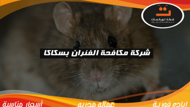 Photo of شركة مكافحة الفئران بسكاكا