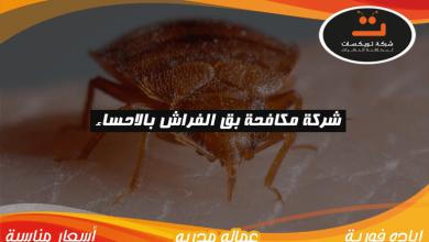 Photo of شركة مكافحة بق الفراش بالاحساء