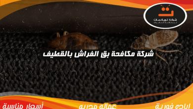 Photo of شركة مكافحة بق الفراش بالقطيف