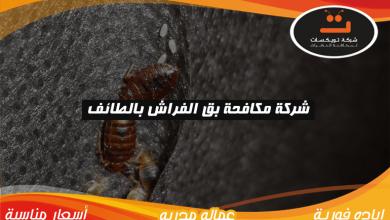 Photo of شركة مكافحة بق الفراش بالطائف