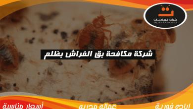 Photo of شركة مكافحة بق الفراش بظلم