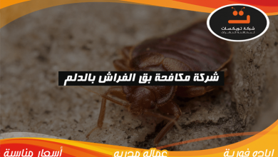 Photo of شركة مكافحة بق الفراش بالدلم