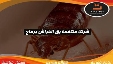 Photo of شركة مكافحة بق الفراش برماح