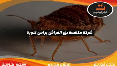 Photo of شركة مكافحة بق الفراش براس تنوره