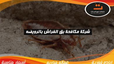 Photo of شركة مكافحة بق الفراش بالرويضه