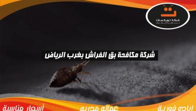 Photo of شركة مكافحة بق الفراش بغرب الرياض