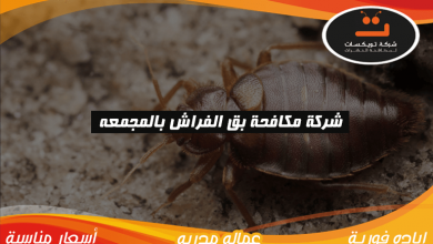 Photo of شركة مكافحه بق الفراش بالمجمعة