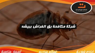 Photo of شركة مكافحه بق الفراش ببيشة