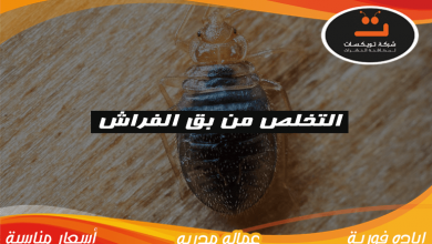 Photo of التخلص من بق الفراش