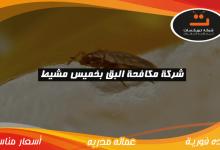Photo of شركة مكافحة البق بخميس مشيط