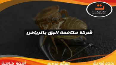 Photo of شركة مكافحة البق بالرياض