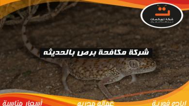 Photo of شركة مكافحة برص بالحديثه