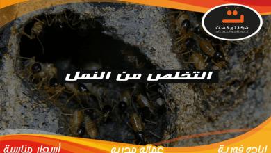 Photo of التخلص من النمل