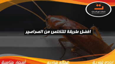 Photo of افضل طريقة للتخلص من الصراصير
