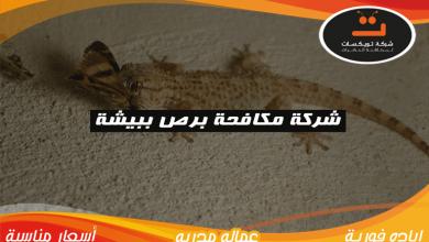 Photo of شركة مكافحه برص ببيشة