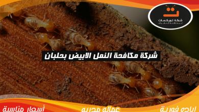 شركة مكافحه النمل الابيض بحلبان