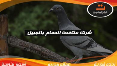 Photo of شركة مكافحة الحمام بالجبيل