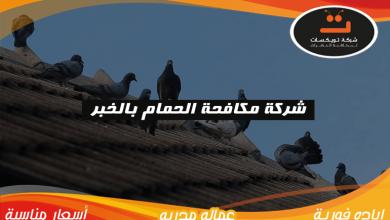 Photo of شركة مكافحة الحمام بالخبر