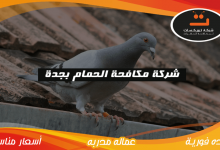 Photo of شركة مكافحة الحمام بجدة