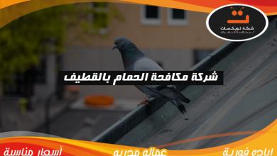Photo of شركة مكافحة الحمام بالقطيف