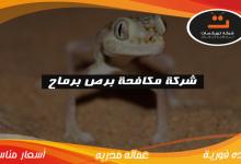 Photo of شركة مكافحه برص برماح