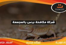 Photo of شركة مكافحه برص بالمجمعة