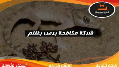 Photo of شركة مكافحه برص بظلم