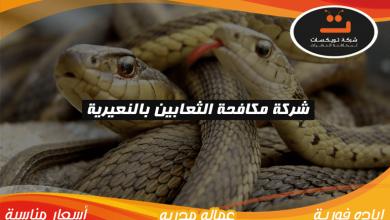 Photo of شركة مكافحة الثعابين بالنعيرية