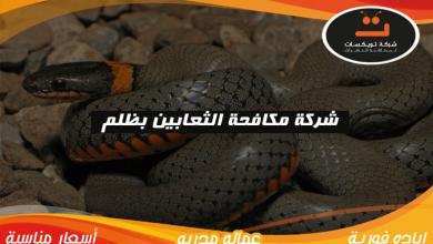 Photo of شركة مكافحه الثعابين بظلم