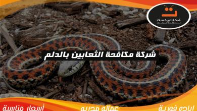 Photo of شركة مكافحه الثعابين بالدلم