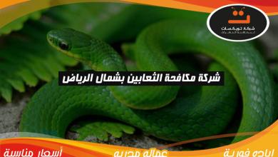 Photo of شركة مكافحه الثعابين بشمال الرياض