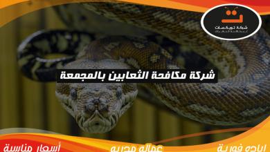 Photo of شركة مكافحه الثعابين بالمجمعة