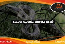 Photo of شركة مكافحة الثعابين بالرس