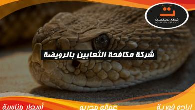 Photo of شركة مكافحة الثعابين بالرويضه