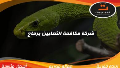 Photo of شركة مكافحة الثعابين برماح
